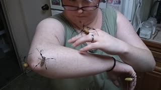 Five Spiders, One Arm