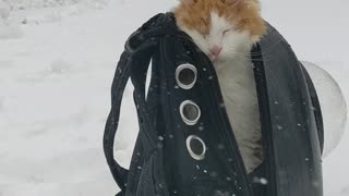 """Cat Says """"Nope"""" to Snow Storm"""