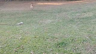 Playing catch with my little hurl Itsa.