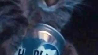 Grey cat asleep holding beer on sofa - Video
