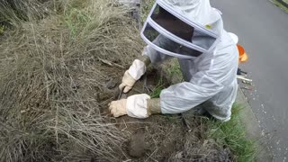 A Professional Excavates A Nest Of Wasps And All We Can Say Is 'Nope' - Video