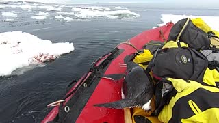 Penguin Jumps on Board Research Boat to Say Hello - Video