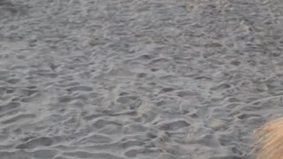 The Florida beaches are the best! 2021 01 24