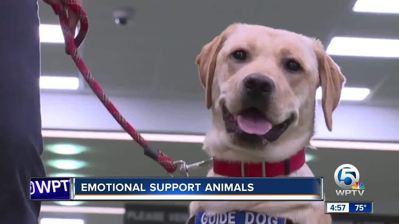 Florida lawmaker wants to stop misuse of emotional support animals