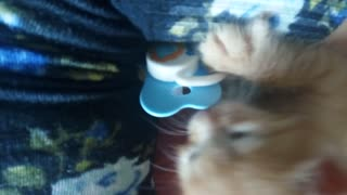 Rescued Kitten Loves his Pacifier - Video