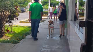 Dog Carries Bucket - Video