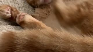 This Cat's Foot Seem to be Confused