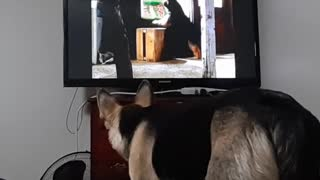 My Dog Loves Watching TV