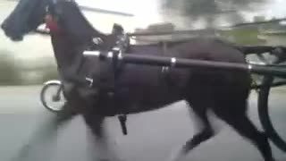 Horse Race with Tonga on public Road  - Video