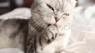 cat is playing with hand
