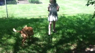 Dog hilariously chases bubbles