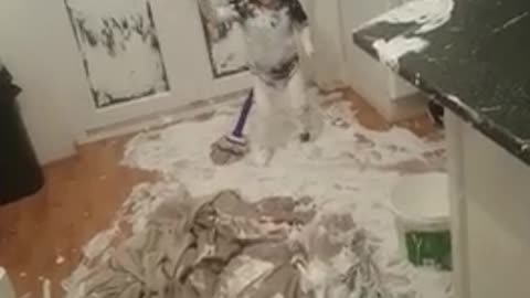 Little boy uses mop to create spectacular paint mess in the kitchen
