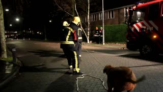 Dutch Firefighters Get a Little Help with Damaged Trees - Video
