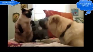 Puppies flirt with cats