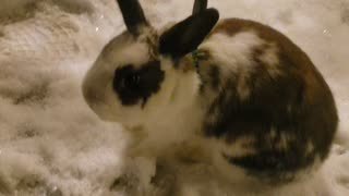 Rabbits First Snow