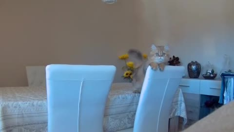 Kitten delivers very cute jump scare