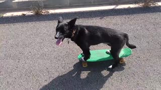 Talented dog rides a skateboard with ease! - Video