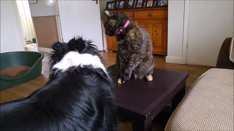 PAW-some dog loves his PURR-fect cat playmate so much that he gives her his favourite toy!