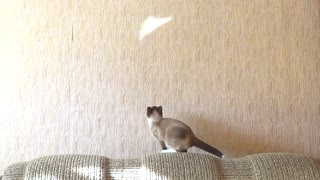 Cat attempts to catch reflection, wipes out adorably! - Video