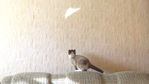 Cat attempts to catch reflection, wipes out adorably!