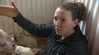 Sick Sheep Shocks Owner with a Miraculous Birth - Video