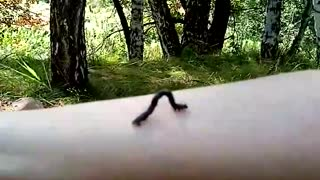 The funny caterpillar walks on my hand