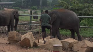 Most funny and cute baby elephant is trying to escape  - Video
