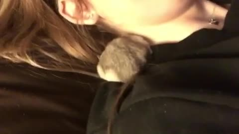 Hamster Does Forward Roll