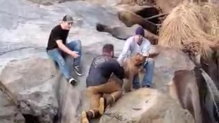 Man Rescues His Dog from Frigid Waterfall