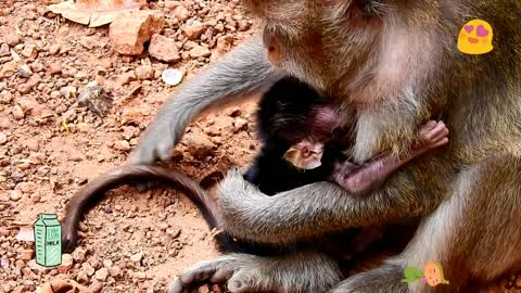 Monkey mother really care good like the people when baby monkey very young