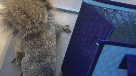 Attack of the adorable squirrel