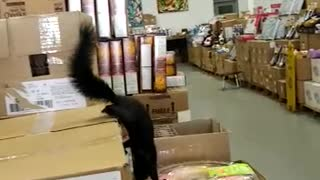 Squirrel surprises shopper inside store