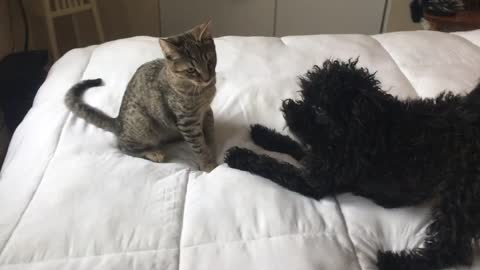 kitty vs puppie