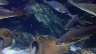 Underwater World - Video
