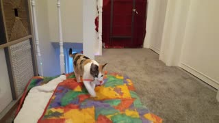 Kitten is truly amazing at playing fetch