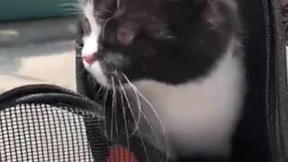 Take the cat outside  - Video