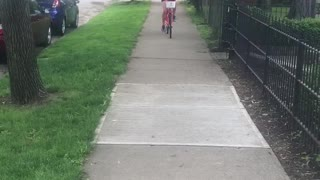 Girl rides red bike down sidewalk with black chihuahua in basket - Video