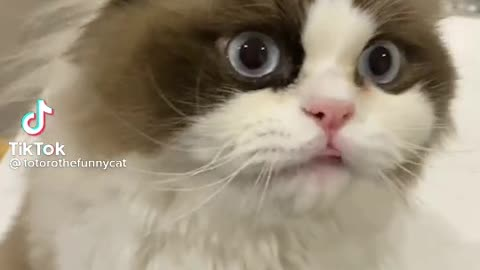 Cute cat is hungry