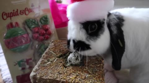 Bunny rabbits open their Christmas present