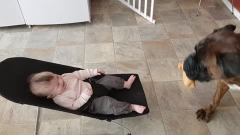 Boxer Has Baby And Mom Cracking Up With His Performance, The Belly Laughs Are Epic