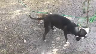 Puppy wants to play with rope so bad