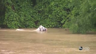 Horses Rescued From Flood Waters in Texas - Video