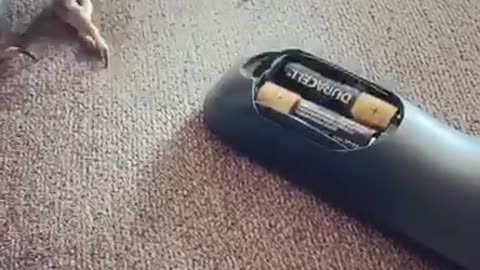Smart parrot knows how to remove the remote battery case