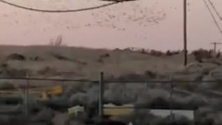 Bird Flock Causes Power Outage