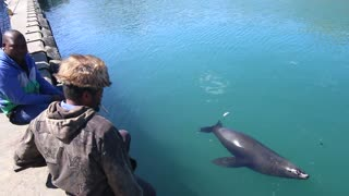 Seal Takes Fish Out of Man's Mouth - Video