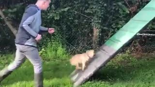 Training Dog to Win the Cup - Video