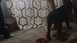 Cat tries to scratch black dog