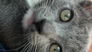 Cat knows that she is being recorded - Video