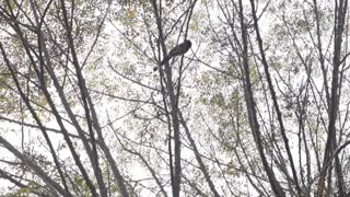 Strange Bird found in Pakistan with Strange voice  - Video