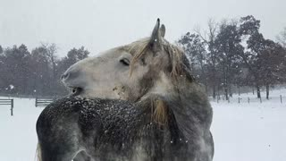 Silly horse tries to get icicles off of whiskers